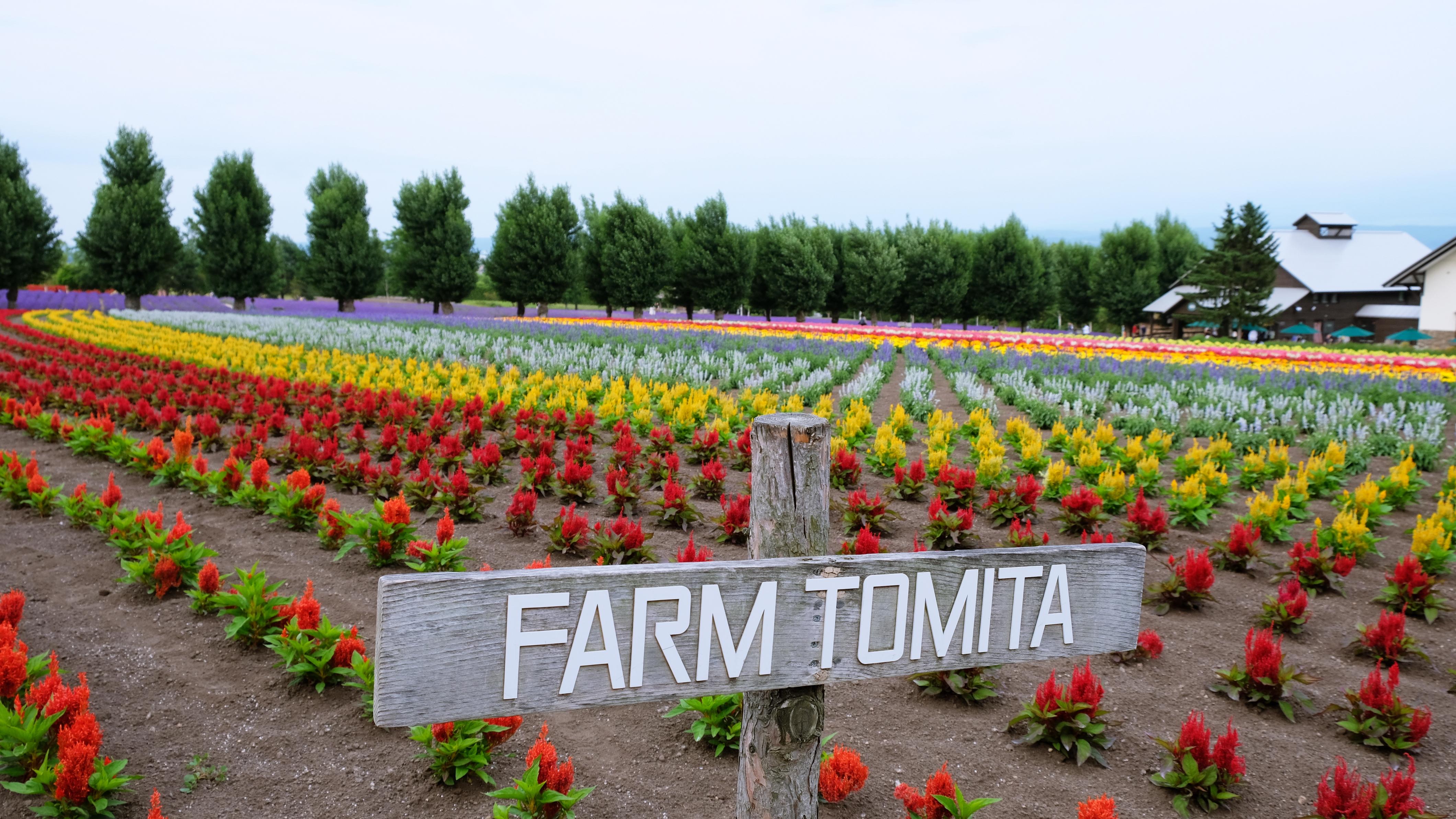 Furano-tomita9